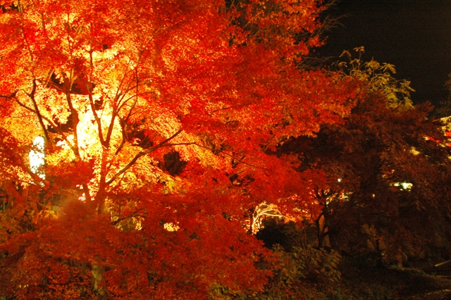 紅葉夜写真