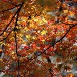 軽井沢の紅葉の時期とおススメスポットと混雑状況は?
