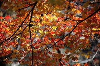 神代植物園紅葉の見頃はいつ