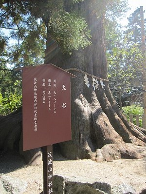 筑波山神社の大杉とお水取り