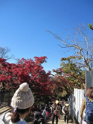 高尾山の紅葉狩りの見ごろは?混雑状況は?