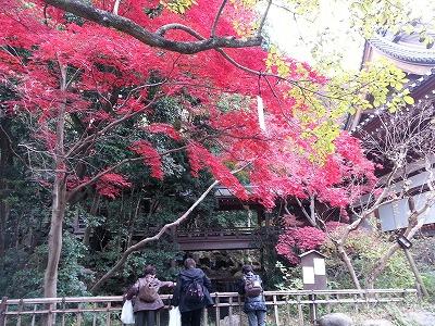 深大寺参拝と紅葉