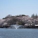 吉祥寺のお花見デートと言えば井の頭公園と周辺おすすめショップ情報!!