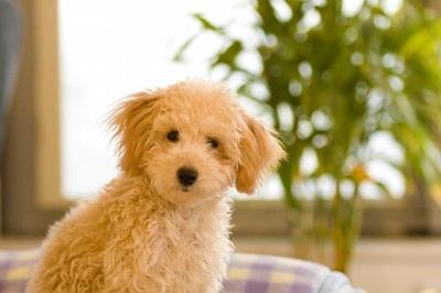 犬が熱中症になりやすい時期は?室内での対策と散歩など屋外では?
