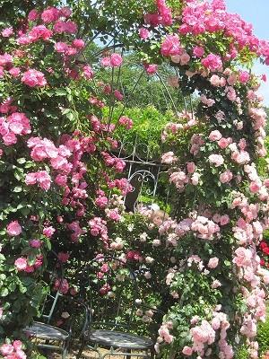 神代植物公園バラ園記念写真はここでとる