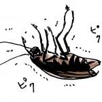 ゴキブリのベランダ対策!!今年は絶対侵入させない駆除の方法とは?