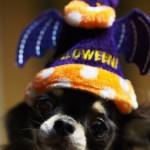 ハロウィン犬仮装の画像や動画は?楽天で人気の犬の衣装も紹介します!!