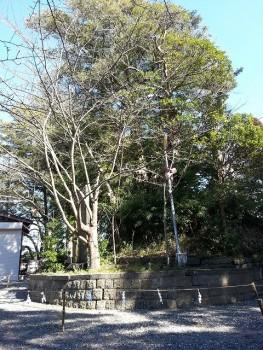 s-玉前神社 (9)