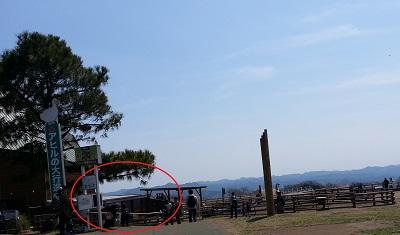 マザー牧場アルパカ (2)