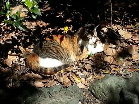 熱田神宮パワースポット神池猫