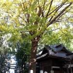 田無神社はパワースポットご神木やお水取りなど見所を紹介!!