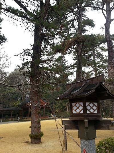 武田神社三葉の松 (2)
