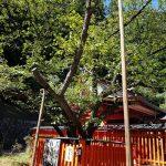 金桜神社とご利益とパワースポット見所は?