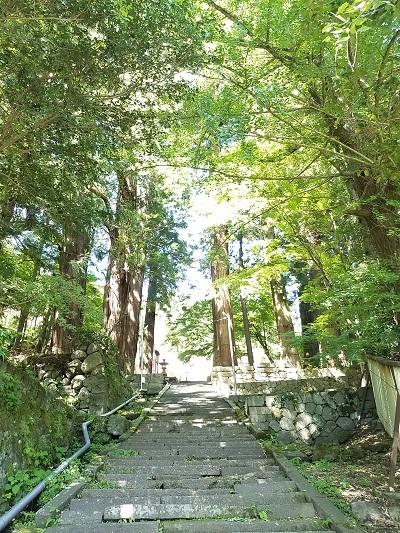 金桜神社杉林パワースポット