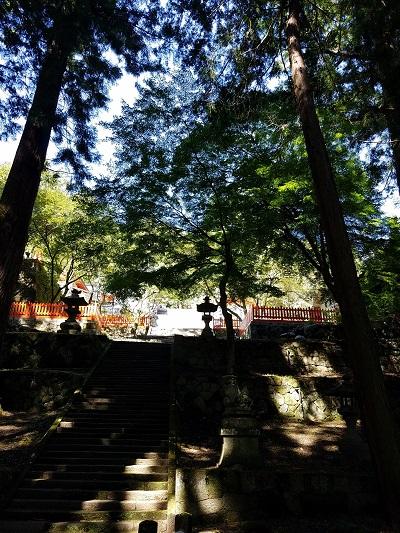 金桜神社杉林を抜けて