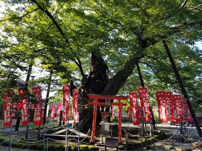 秩父今宮神社の御神木でハートを発見!!
