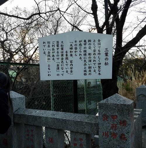 稲積神社の三葉の松の看板