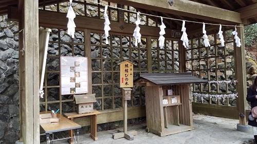 三峯神社縁結びの木