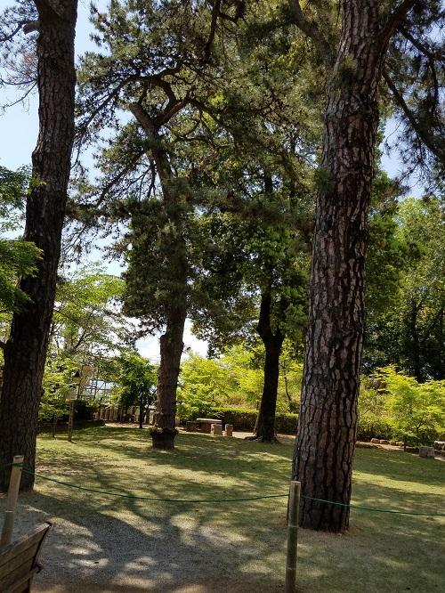 武田神社三葉の松の場所は?ご利益と使い方も。