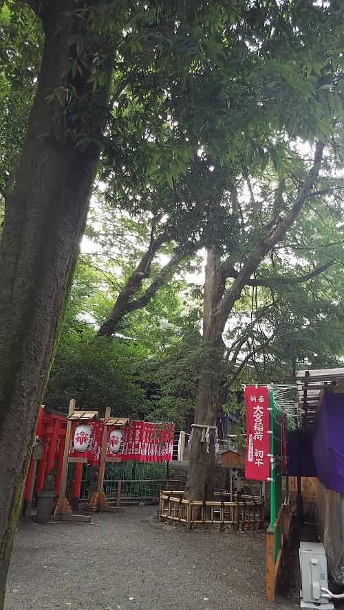 大宮八幡宮共生木全体