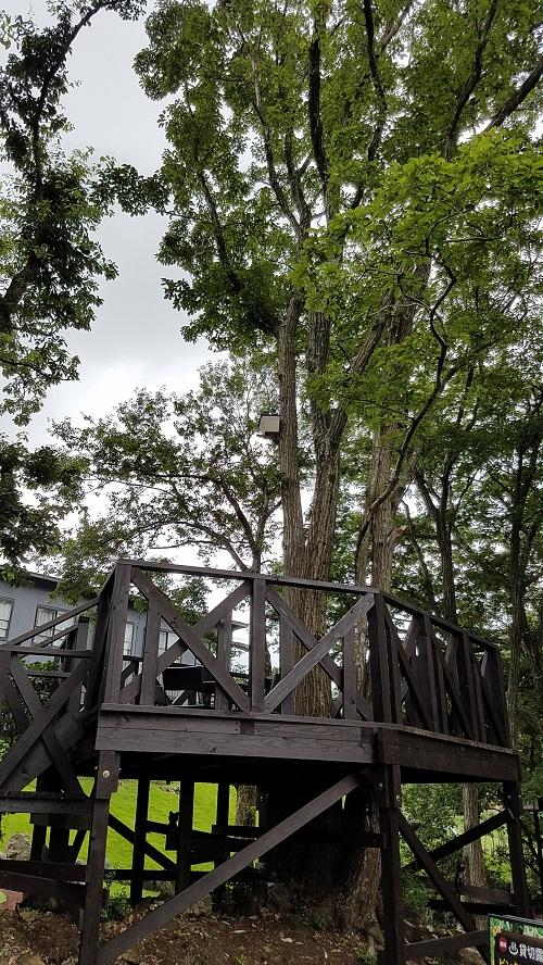 アンダの森ツリーハウス